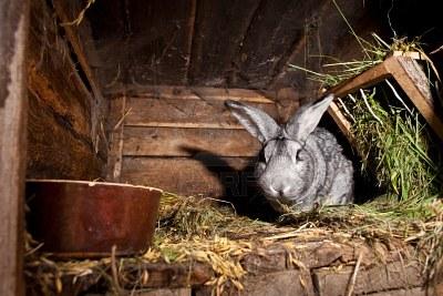 Les lapins nains lapins nac et oiseaux for Clapier lapin fait maison